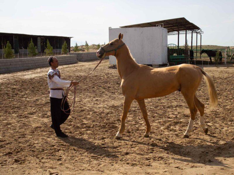 Hestefarm Hest Turkmenistan