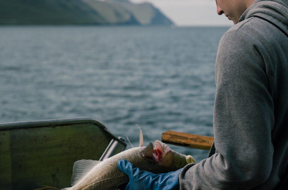 Podcast: Fisk, folk og får på Færøerne